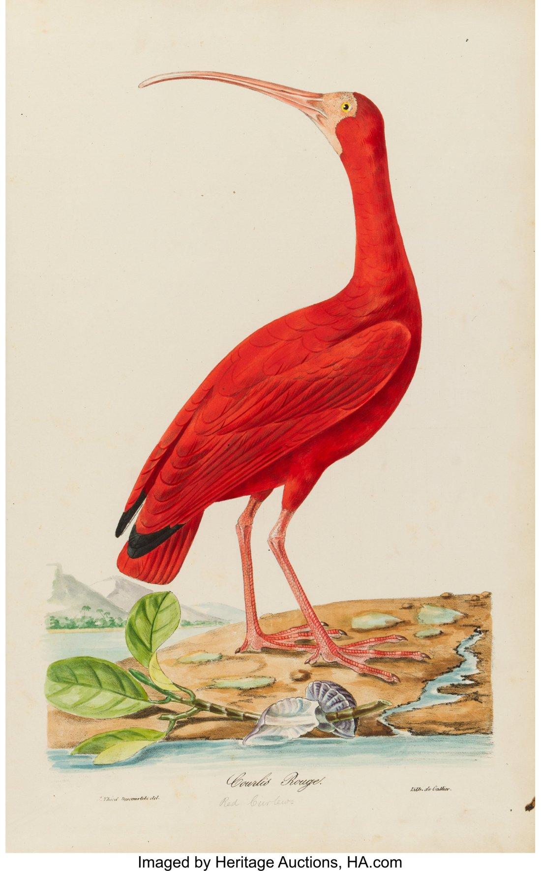 Oiseaux brillans du Brésil Courlis Rouge credit Heritage Auctions